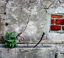 Wall, buds and leaves by jalb