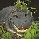 Alligator with hat of weeds by Larry  Grayam