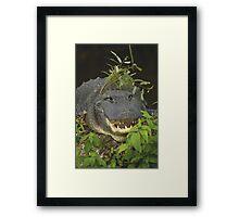 Alligator with hat of weeds Framed Print