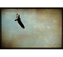 Flying Solo Photographic Print