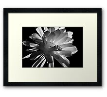 Special Evening Event (with the QUEEN) Framed Print