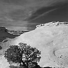 Utah Pinyon by AOrlemann