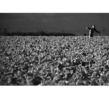 Basking in the sun (IR) Photographic Print