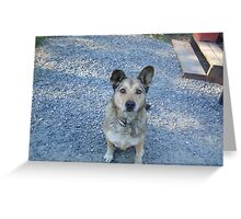 Puppy Face!!! Greeting Card