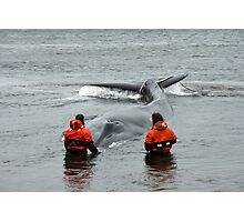 Whale rescue Photographic Print