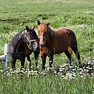 South Dakota Horses by Teresa Zieba