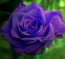 Violet Indigo Blues by ienemien
