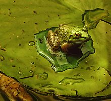Frog by Gaby Swanson  Photography