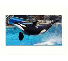 If Orcas Could Fly Art Print