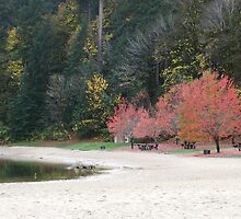 Autumn time at Loon Lake Beach by scenebyawoman