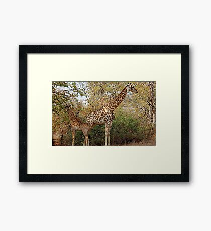 BACK TO BACK, MOTHER AND CHILD IN THE WILD ! Framed Print