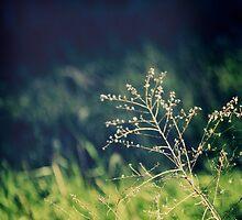 Field of Dreams by nickwelsh