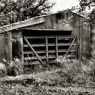 Rusty Barn   2   ( BoneYard Series ) by Carla Jensen