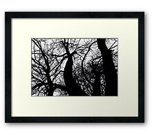 'So Jealous' Korumburra Botanical Garens Framed Print