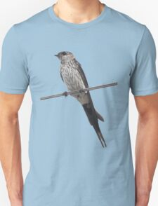 Red-Rumped Swallow Vector Isolated Against Blue T-Shirt