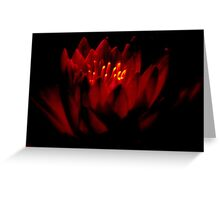 THE   WARM GLOW  OF A   WATER  LILY    Greeting Card