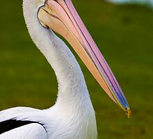 Pete the Pelican!! by Wendi Donaldson Laird