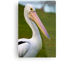 Pete the Pelican!! Metal Print