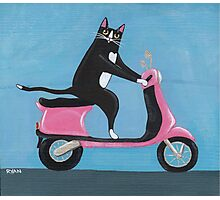 Cat on a Vespa Photographic Print