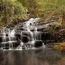 Great Otway National Park by William Bullimore