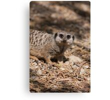 meerkat in the forest Canvas Print