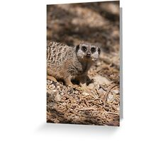 meerkat in the forest Greeting Card