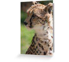 cheetah in the jungle Greeting Card