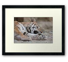 tiger in the jungla Framed Print