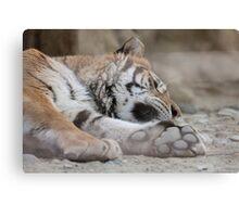 tiger in the jungla Canvas Print