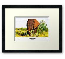 Limited Edition Prints - Fauna Framed Print