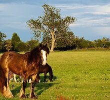 Horses  by gfairbairn