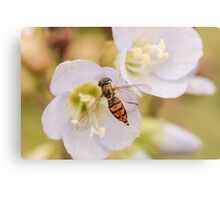 Colorful Fly Canvas Print