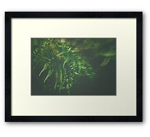 The Understory Framed Print