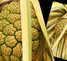 Pandanus Fruit Art by Caroline Angell