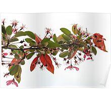Beautiful Tree Branch Poster