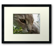 intent! Framed Print