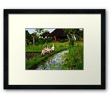 Rice Fields, Ubud, Bali Framed Print