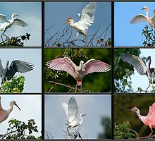 Whole Lotta Flapping Going On! by Bonnie T.  Barry