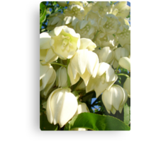 Cream Flowers of A Cordyline Cabbage Tree Metal Print