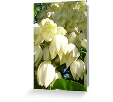 Cream Flowers of A Cordyline Cabbage Tree Greeting Card