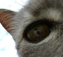 in a cat's eye by armadillozenith