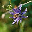 Beautiful Bee by Nick McGuire