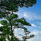 The tree on the roof by TaniaLosada
