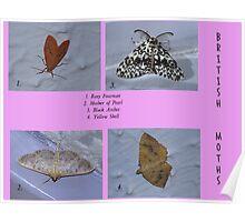British Moths 002 Poster