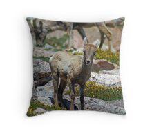 Lil' Bighorn Throw Pillow