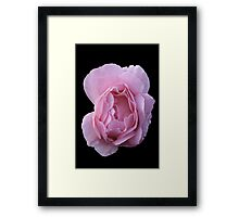 Pink Rose with Dewdrops Framed Print