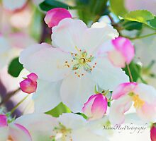 Crab Apple Tree Bloom by Yannik Hay