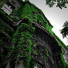 Ivy by Ashley W