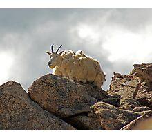 The Happy Goat Photographic Print