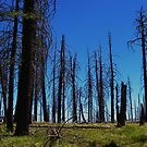 Mount Lemon after the Fire by gcampbell